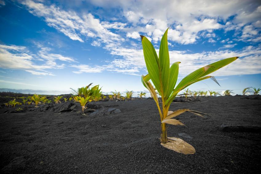 https://cf.ltkcdn.net/garden/images/slide/112063-849x565-Black-Sand.jpg