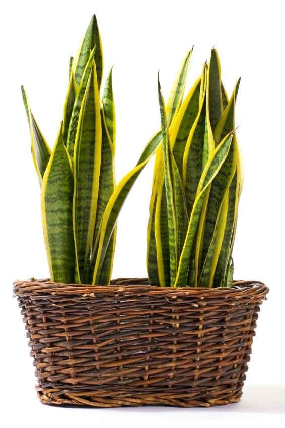 Indoor Plants for Shade | ToKnow on indoor plant cage, indoor plant watering can, indoor plant cart, indoor plant box, indoor plant trellis, indoor plant ladder, indoor plant cabinet, indoor plant trough, indoor plant stool, indoor plant vase, indoor plant with lights,