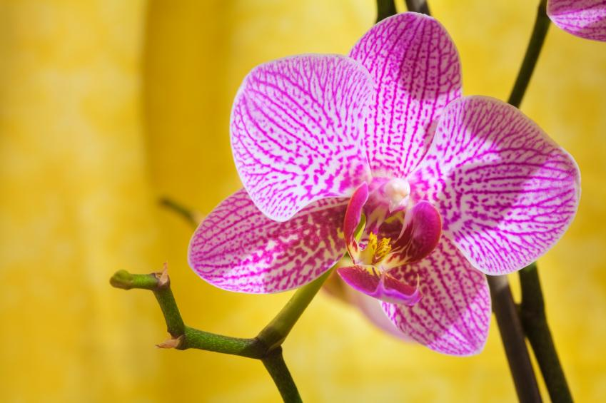 https://cf.ltkcdn.net/garden/images/slide/112170-849x565-orchid.jpg