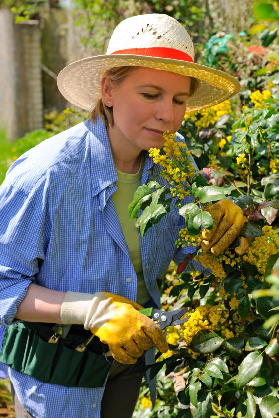 https://cf.ltkcdn.net/garden/images/slide/112173-566x848-plants-flowering-late-summer-1.jpg