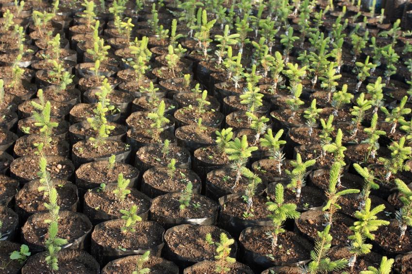 https://cf.ltkcdn.net/garden/images/slide/112196-849x565-free-tree-seedling-2.jpg