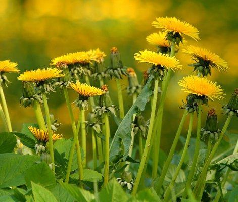 https://cf.ltkcdn.net/garden/images/slide/112252-471x400-weed1.jpg