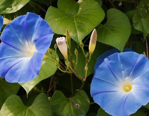 https://cf.ltkcdn.net/garden/images/slide/112261-513x400-weed15.jpg