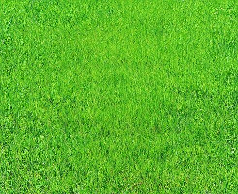 https://cf.ltkcdn.net/garden/images/slide/112265-491x400-weed9.jpg
