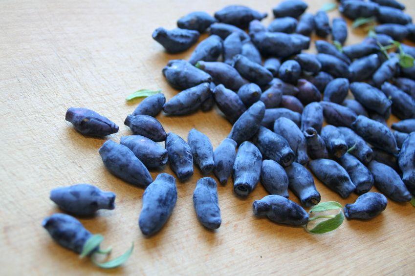 https://cf.ltkcdn.net/garden/images/slide/112272-849x565-Blue_Honeysuckle_Berries.jpg