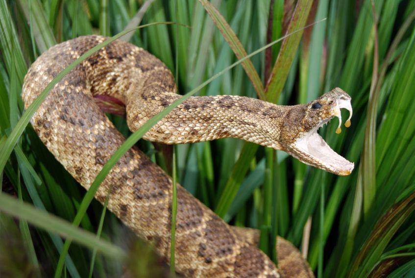 Pictures to Identify Garden Snake Types | LoveToKnow
