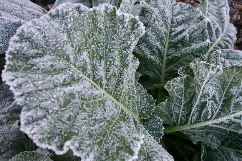 https://cf.ltkcdn.net/garden/images/slide/112306-849x565-Wintergarden4.jpg