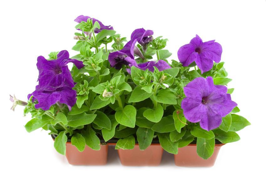 https://cf.ltkcdn.net/garden/images/slide/137390-849x565r1-chooseplants7.jpg