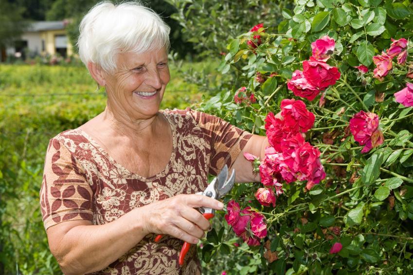 https://cf.ltkcdn.net/garden/images/slide/137391-849x565r1-gardencare8.jpg