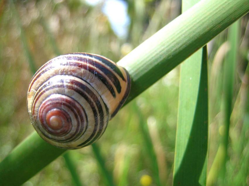 https://cf.ltkcdn.net/garden/images/slide/148803-850x638-snail.jpg