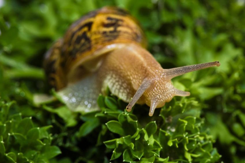 https://cf.ltkcdn.net/garden/images/slide/149776-850x565-Snail-eating-parsley.jpg