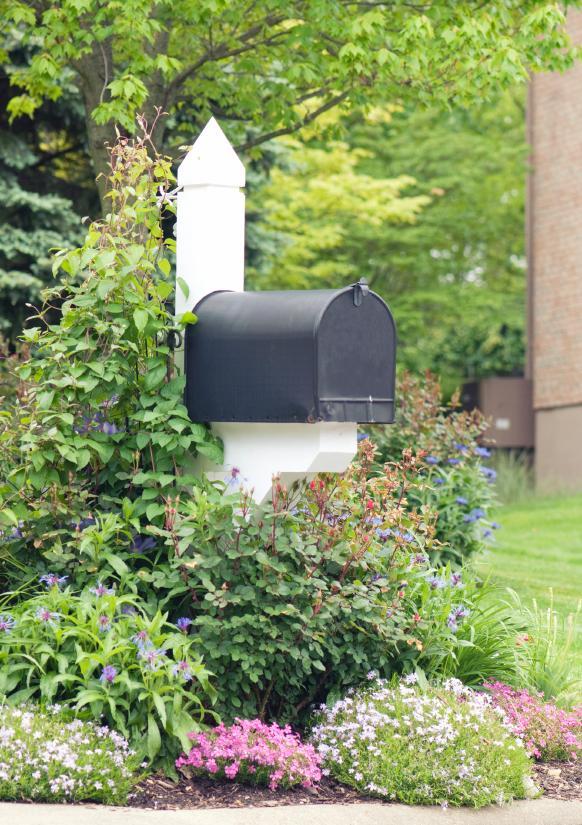 Mailbox With Shrub And Vine