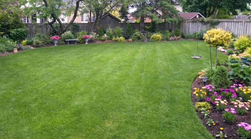 Lawn With Organic Shape
