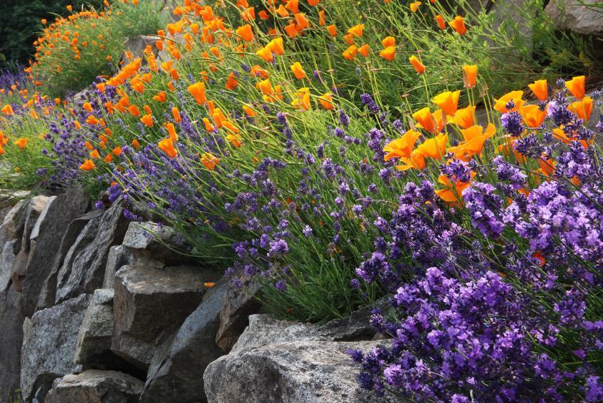 https://cf.ltkcdn.net/garden/images/slide/175372-847x567-rock-riprap.jpg