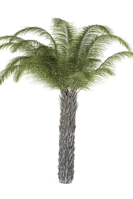 https://cf.ltkcdn.net/garden/images/slide/175477-566x850-butia-capitata.jpg