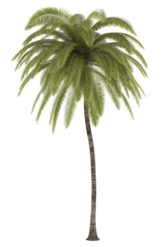 https://cf.ltkcdn.net/garden/images/slide/175478-566x850-cocos-nucifera.jpg