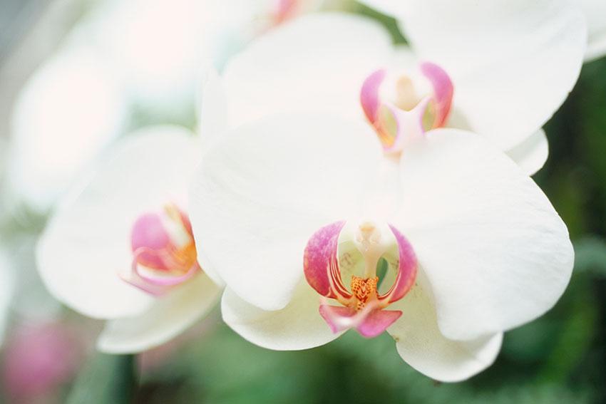 https://cf.ltkcdn.net/garden/images/slide/192015-850x567-Close-up-of-Phalaenopsis.jpg