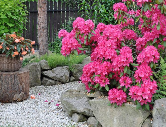 https://cf.ltkcdn.net/garden/images/slide/193892-668x510-Rhododendron-flowers.jpg