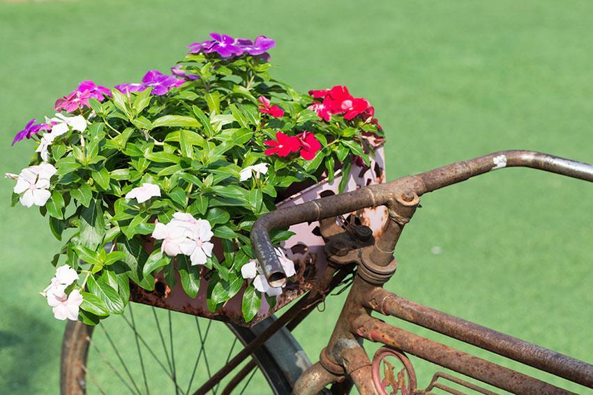 https://cf.ltkcdn.net/garden/images/slide/194308-850x566-old-bicycle-basket-planter.jpg