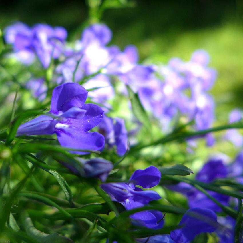 Types of Blue Flowers | LoveToKnow
