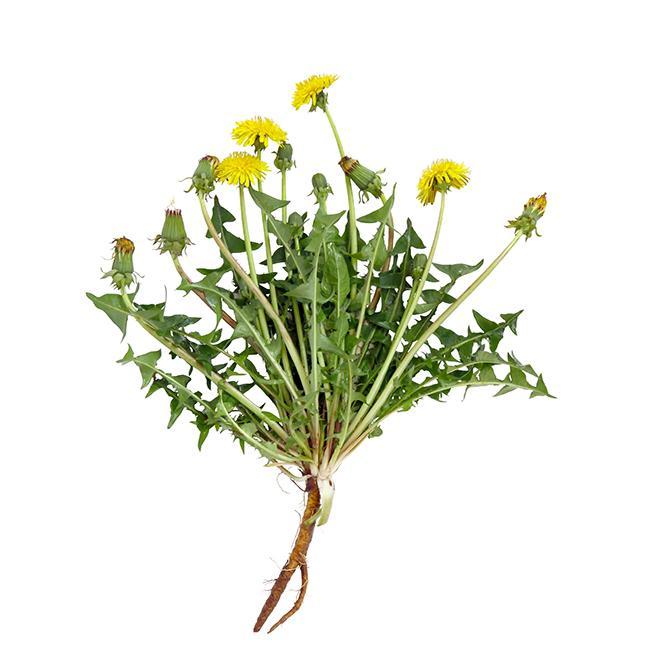 https://cf.ltkcdn.net/garden/images/slide/200037-668x668-Dandelion-weed.jpg