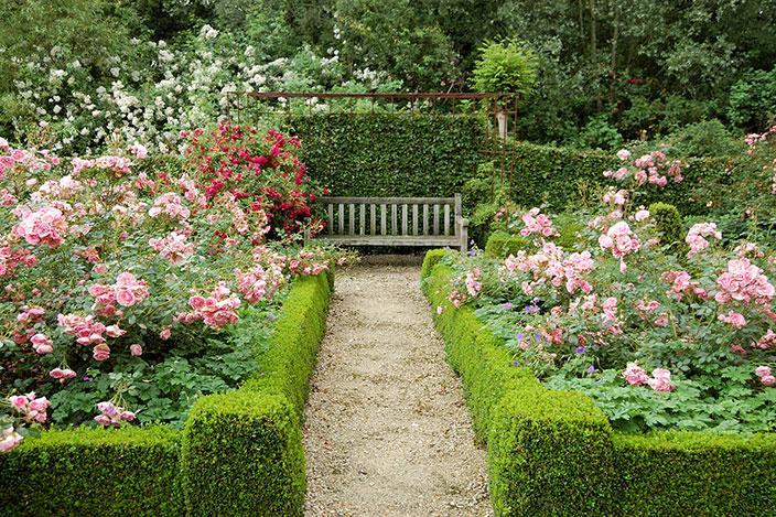 https://cf.ltkcdn.net/garden/images/slide/221319-704x469-Pictures-of-Roses.jpg