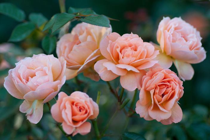 https://cf.ltkcdn.net/garden/images/slide/221320-704x469-What-a-Peach.jpg
