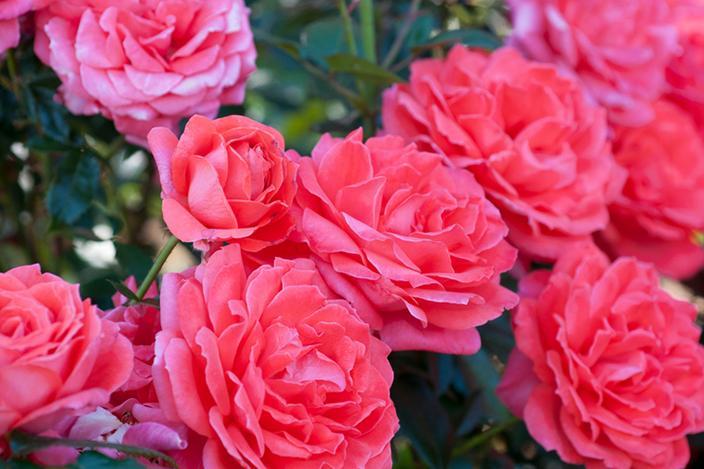 https://cf.ltkcdn.net/garden/images/slide/221324-704x469-Lasting-Peace.jpg