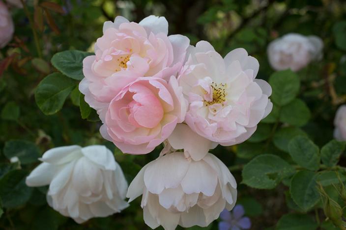 https://cf.ltkcdn.net/garden/images/slide/221334-704x469-Scarborough-Fair.jpg