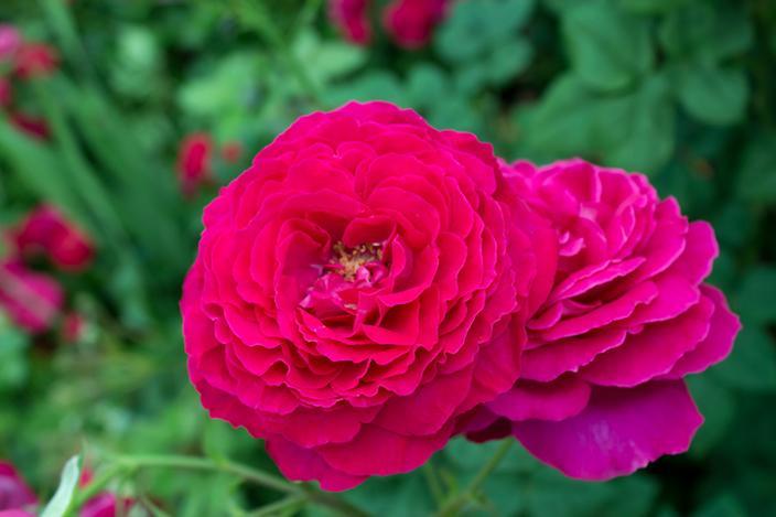 https://cf.ltkcdn.net/garden/images/slide/221337-704x469-Johann-Wolfgang-Von-Goethe.jpg