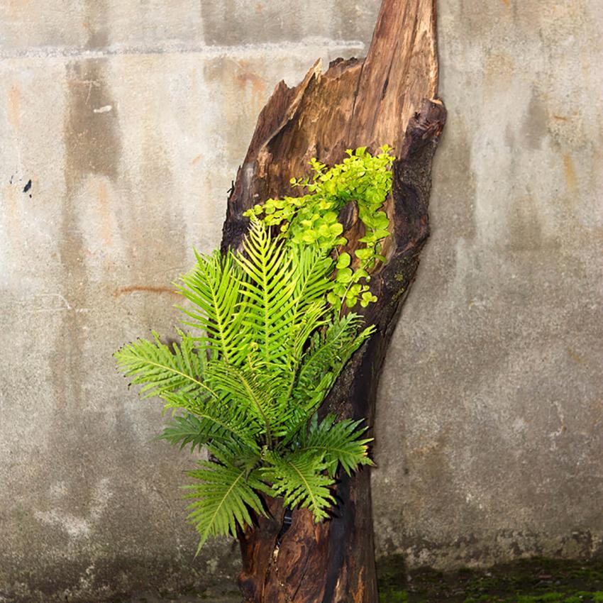 https://cf.ltkcdn.net/garden/images/slide/233209-850x850-18-garden-tree-stumps.jpg