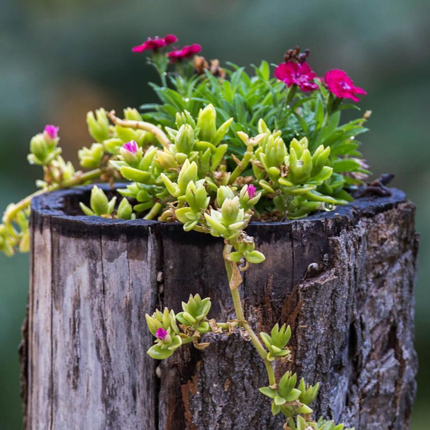 https://cf.ltkcdn.net/garden/images/slide/233214-850x850-23-garden-tree-stumps.jpg