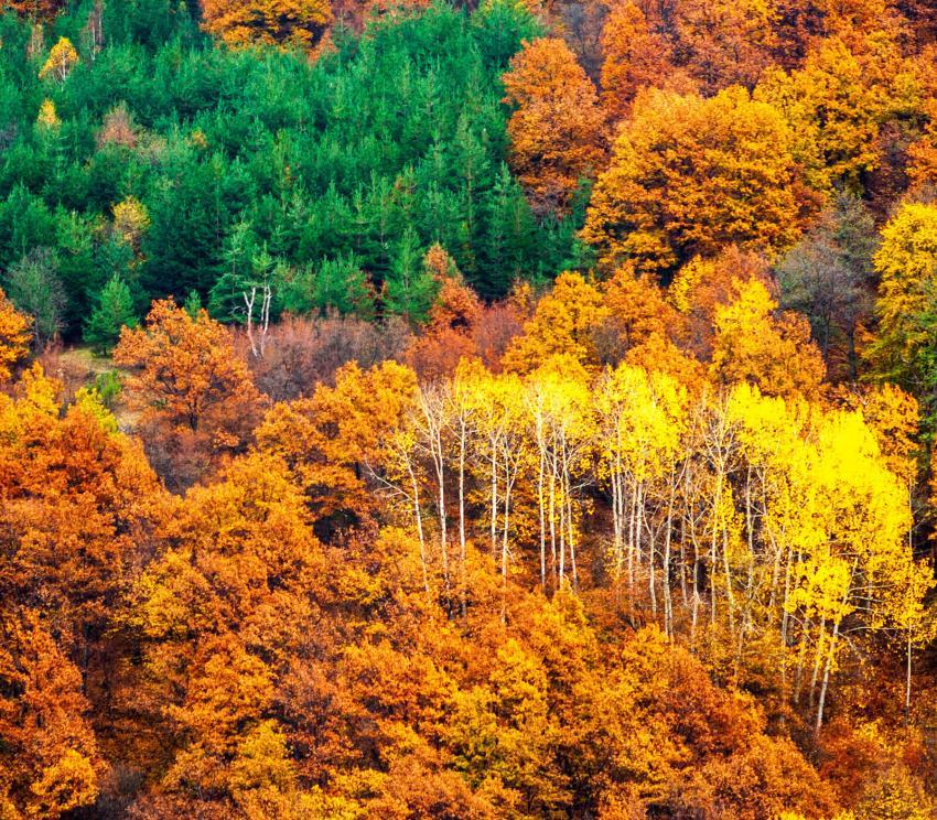 https://cf.ltkcdn.net/garden/images/slide/249575-850x744-2-tree-identification.jpg