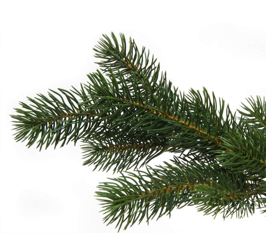https://cf.ltkcdn.net/garden/images/slide/249577-850x744-4-tree-identification.jpg