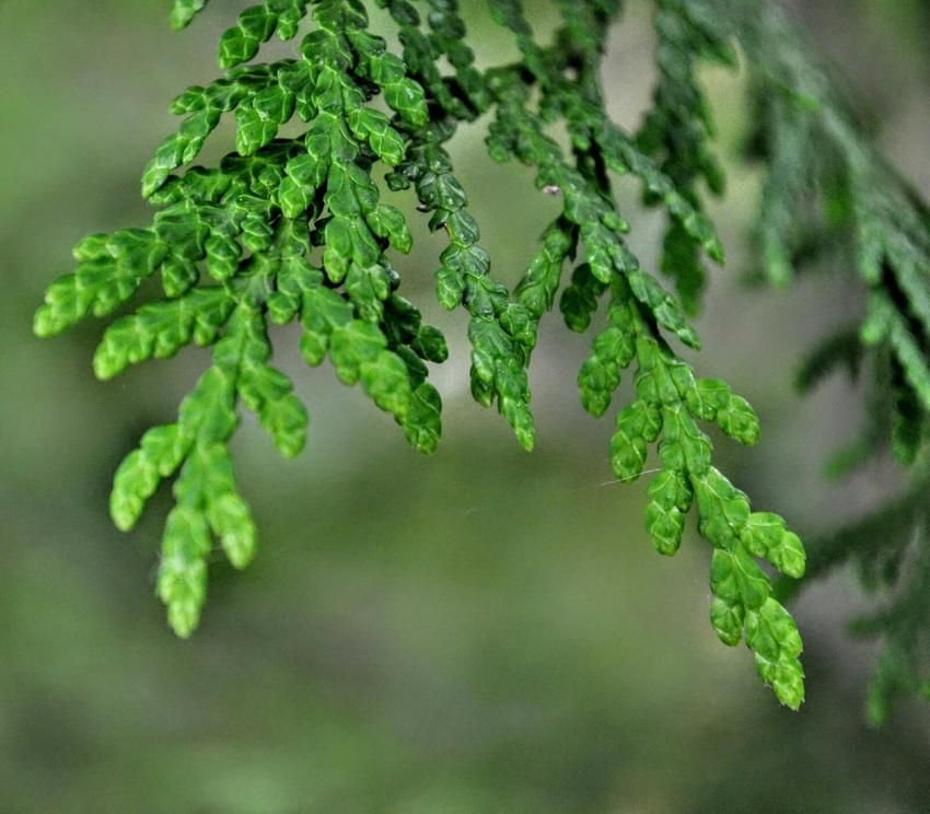 https://cf.ltkcdn.net/garden/images/slide/249578-850x744-5-tree-identification.jpg