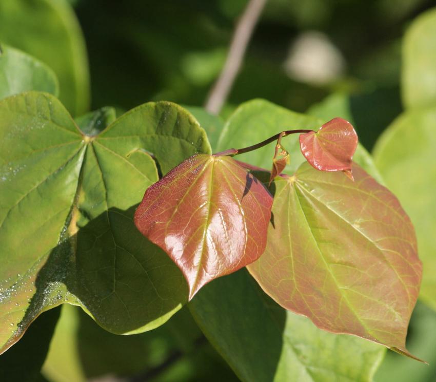 https://cf.ltkcdn.net/garden/images/slide/249586-850x744-14-tree-identification.jpg