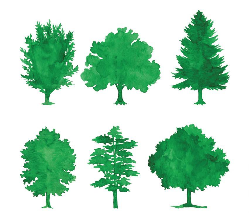 https://cf.ltkcdn.net/garden/images/slide/249588-850x744-16-tree-identification.jpg