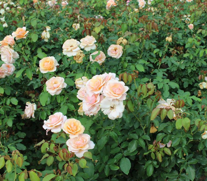 https://cf.ltkcdn.net/garden/images/slide/258182-850x744-2-bellingrath-gardens-alabama.jpg