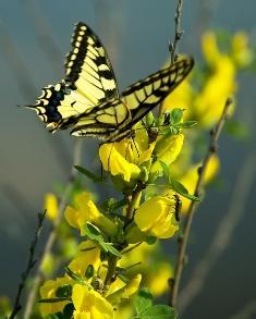 Choosing Plants for a Butterfly Garden