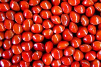 treated seed