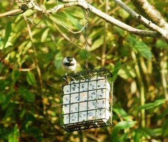 Birdpic.jpg