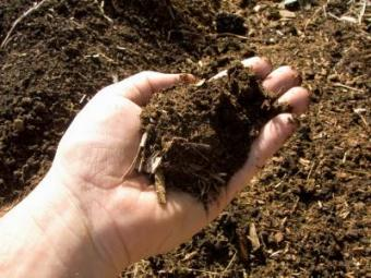 What Is Compost?