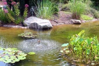 water garden with fountain