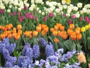 Hicks_flowers.jpg
