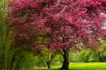 Spring_tree.jpg