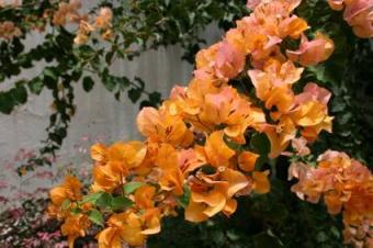 Orange Tropical Flowers