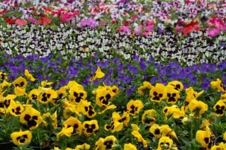Garden Pictures and Slideshows
