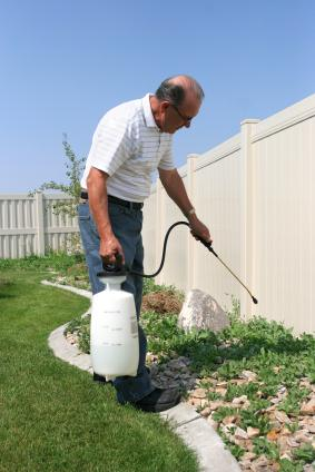 Man applying weed control