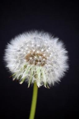 How Do Weeds Spread?