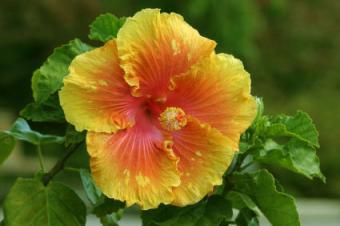 Ideas for Small Tropical Garden